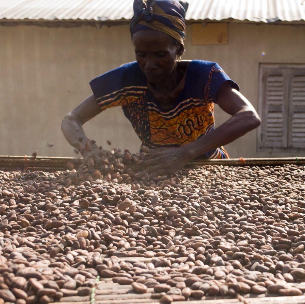 Trocknung Kakaobohnen - zuckerfreie Schokolade